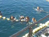Nadando-con-Atunes-Rojos_medium